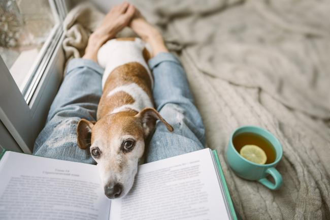 Image dog with cup of tea