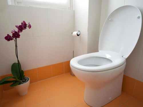 Toilet Repair Denver